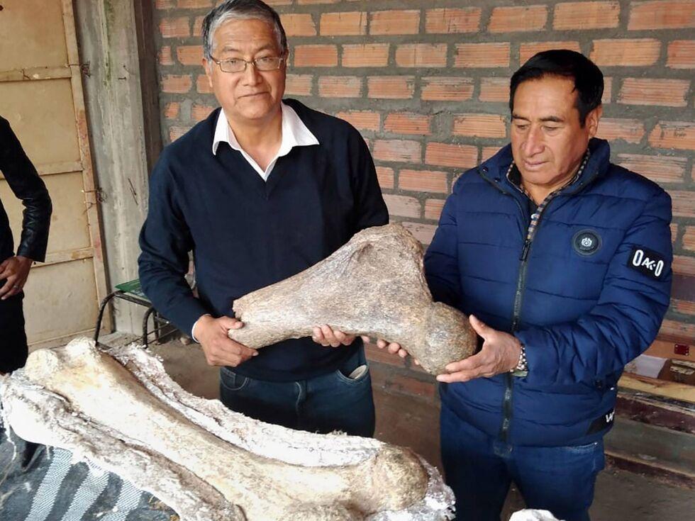 28. April 2019 – 10.000 Jahre haben die Skelettreste des Elefanten auf dem Buckel. Gefunden wurden diese alten Fossilien von einem Polizisten und einem Paläontologen in einer Waldgegend von Peru, 3500 Peter über dem Meeresspiegel.