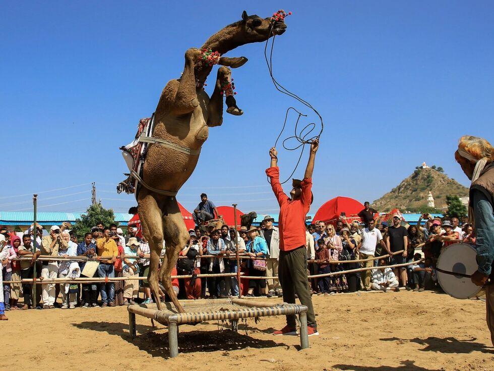 6. November 2019: Beim alljährlichen Kamelfestival in Rajasthan treffen tausende Besucher auf Kameltreiber mit ihren Kamelen, Pferden und anderen Tieren.
