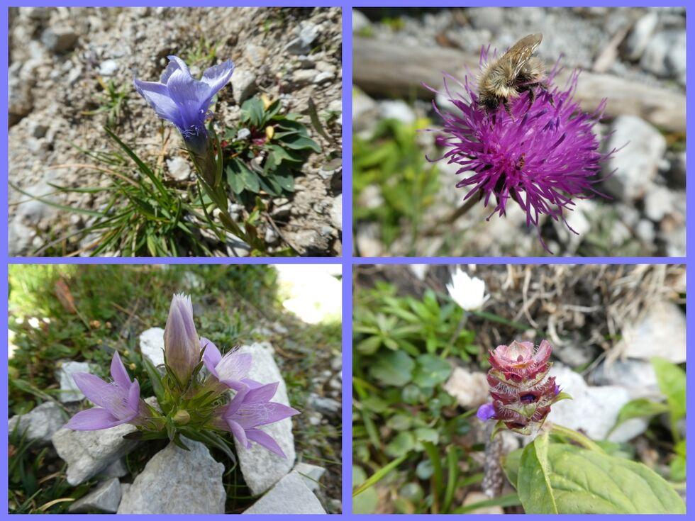 Blumencollage aus dem Gebirge