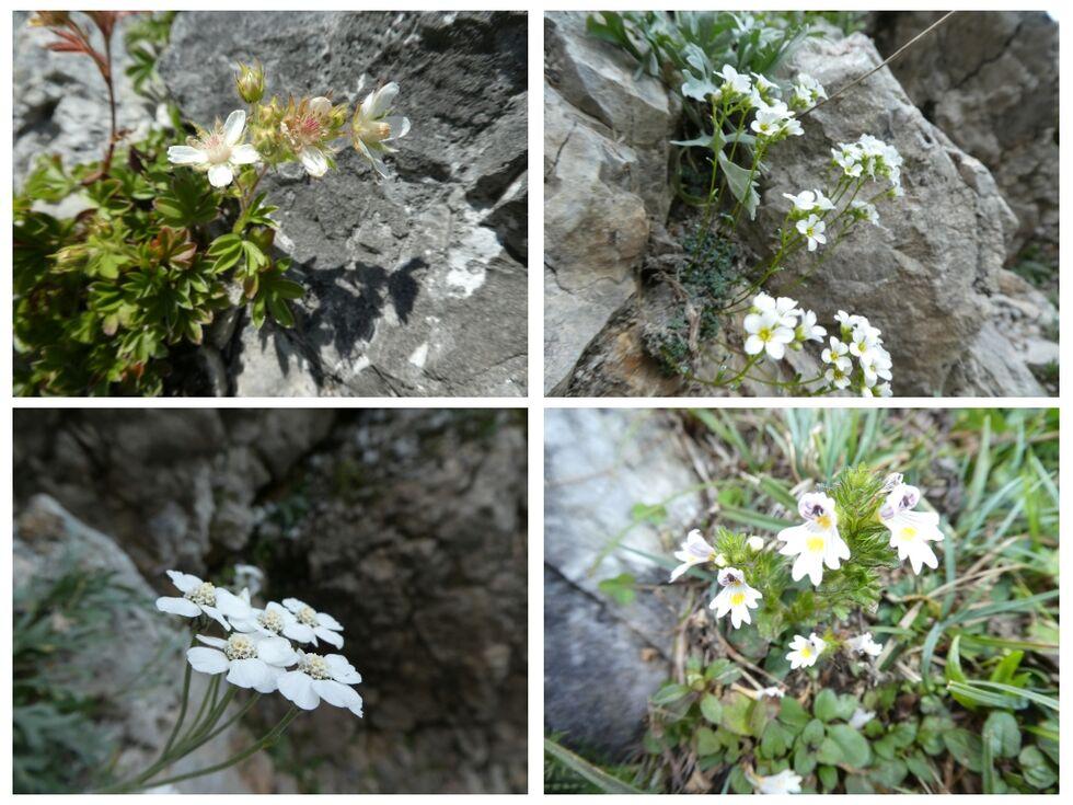 -Blumencollage aus dem Gebirge-