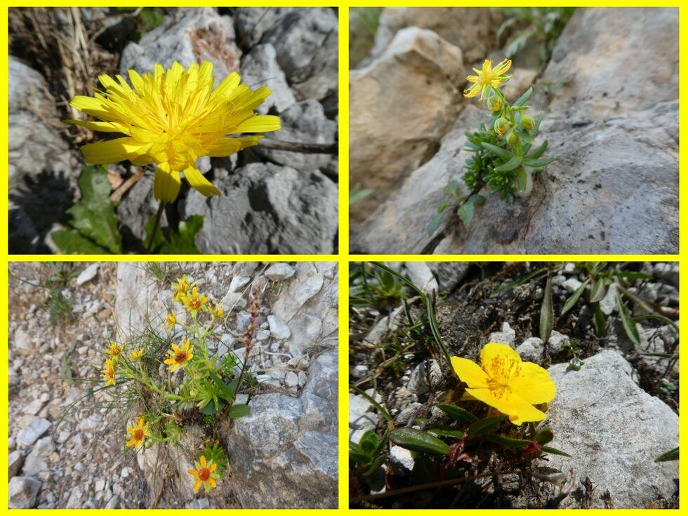 --Blumencollage aus dem Gebirge--