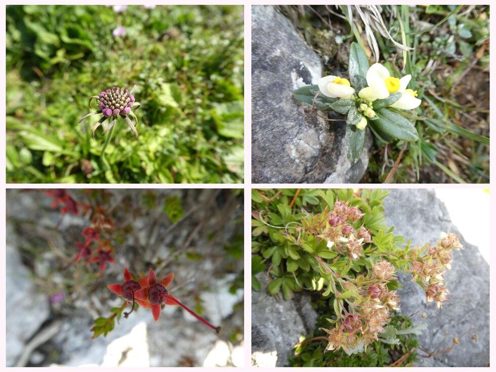 ---Blumencollage aus dem Gebirge---