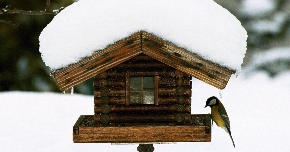 bedrohte singv gel wie viele spatzen meisen und co gibt es noch in salzburg. Black Bedroom Furniture Sets. Home Design Ideas
