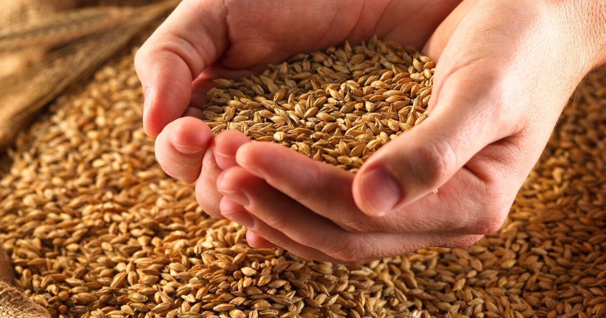 Russland erwägt Exportbeschränkung für Getreide