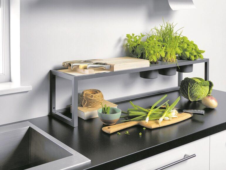 Die Pflanzen Und Kräuter Siedeln In Die Küche Immosnat
