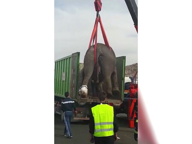 Elefant starb bei Unfall mit Zirkus-Lkw in Spanien | SN.at