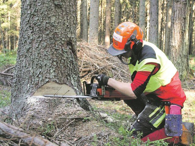 Die Ausbildung zum Forsttechniker ist sehr beliebt.
