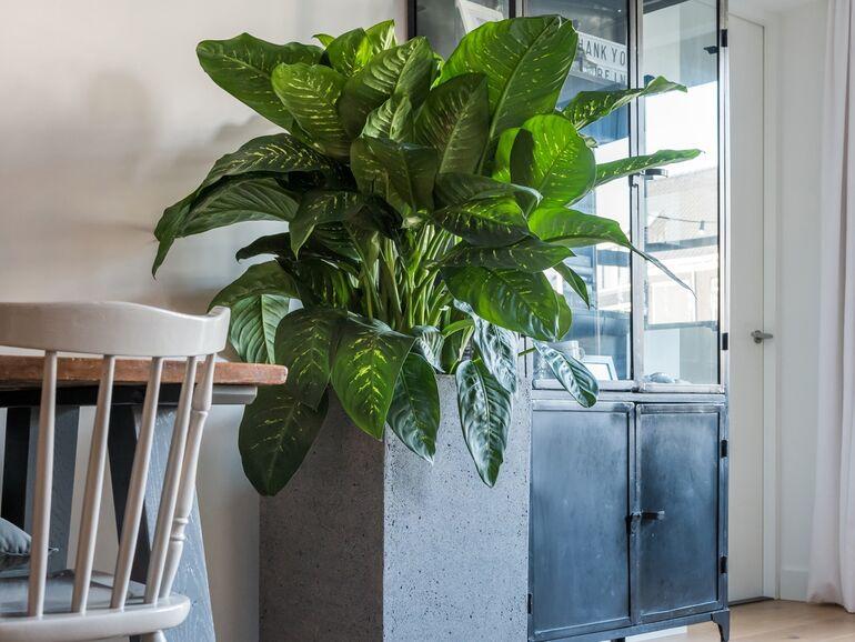 Gestalten Mit Pflanzen Sn At