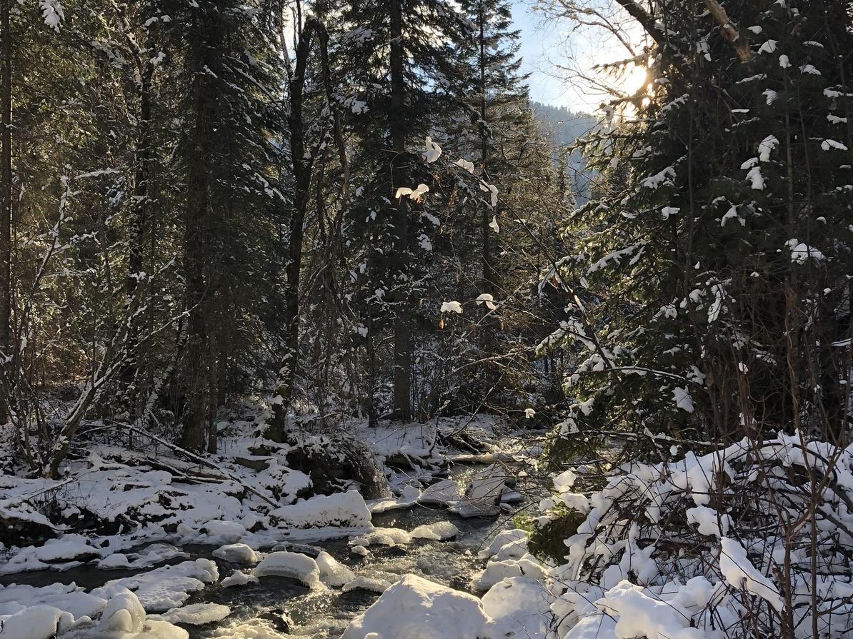 Klimabilanz des Waldes: Neu zu pflanzen, reicht nicht