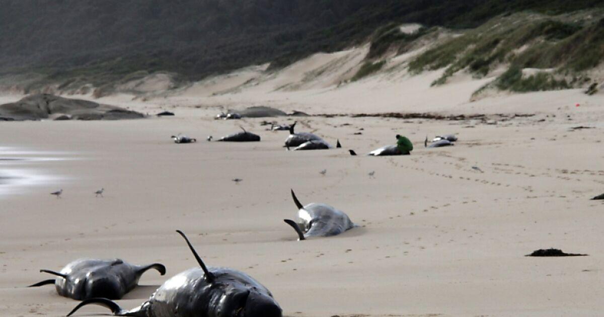 Australien Wale