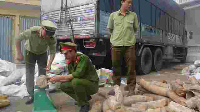 mehrere tonnen elfenbein in vietnam beschlagnahmt. Black Bedroom Furniture Sets. Home Design Ideas