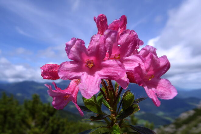 Als Gruß an alle - ein Rosenstrauß | FOTOBLOG SN.at