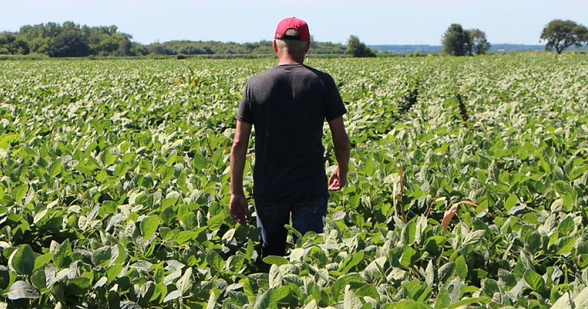 US-Regierung hilft Bauern wegen Zöllen mit zwölf Mrd. Dollar