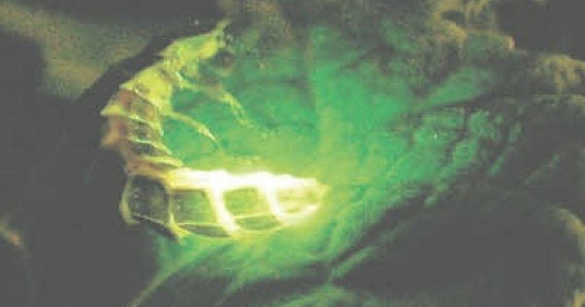 Warum Glühen Glühwürmchen