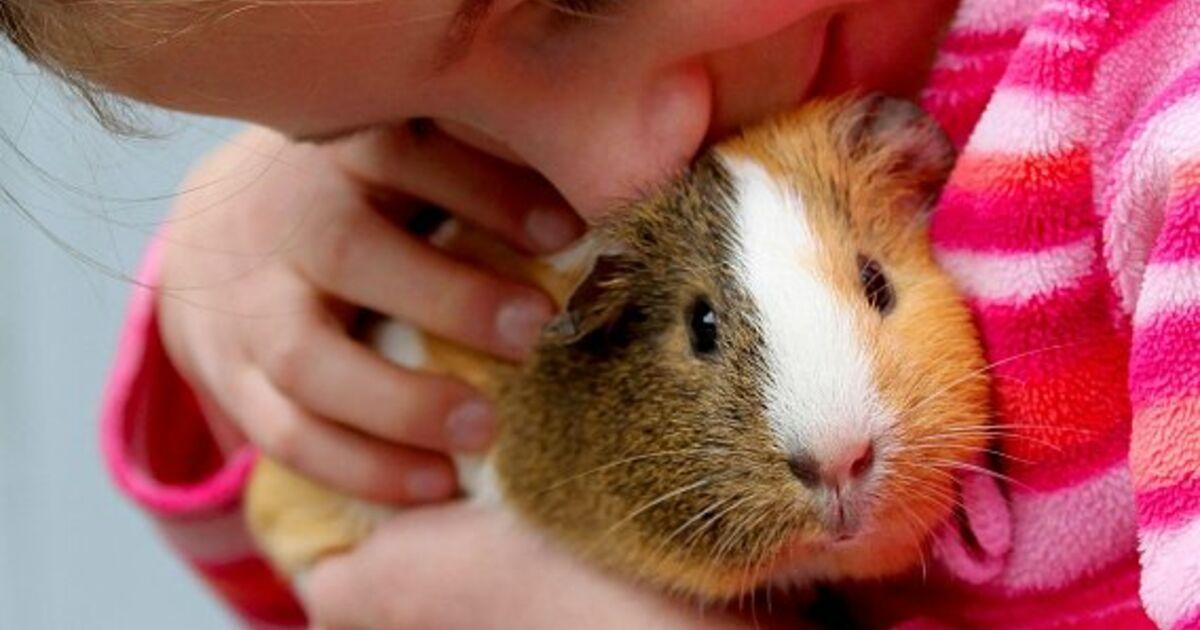 Was Kinder Von Tieren Lernen Konnen Sn At