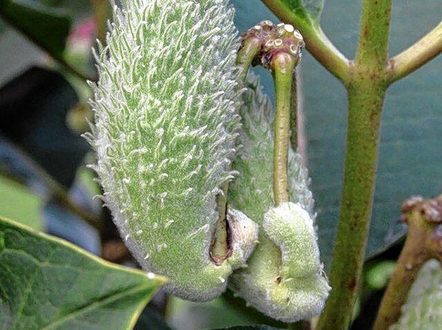 Heimische Pflanzen wenn fremde pflanzen heimische verdrängen sn at