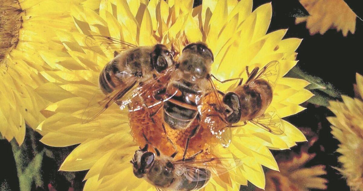 Wetter-macht-den-Bienen-zu-schaffen