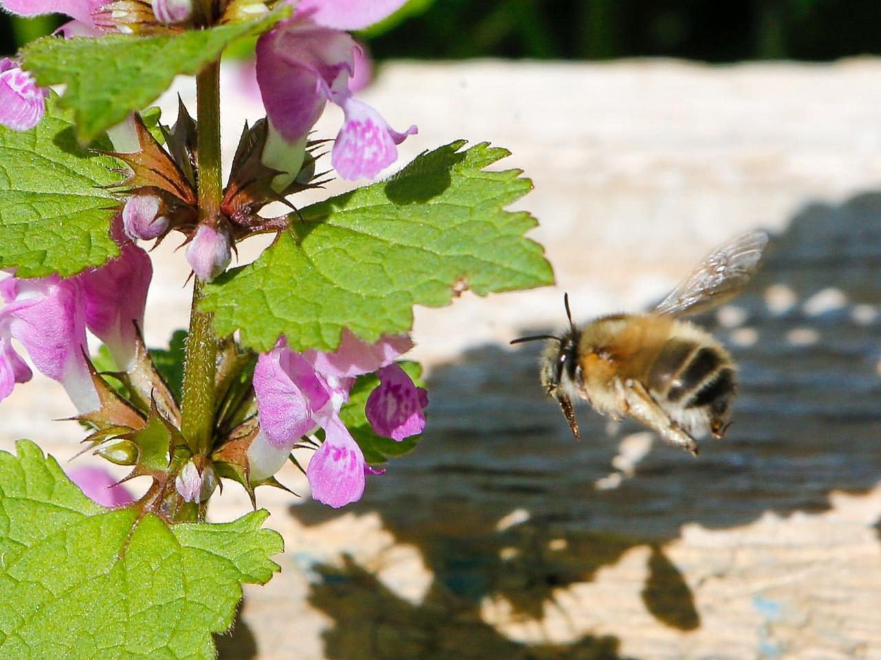 Wie wir die Bienen retten